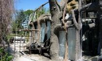ogrod zoologiczny - wybieg dla dzioborozcow